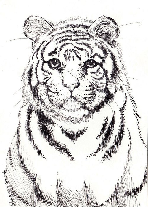 Tiger Greeting Card featuring the drawing Big Tiger by Callan Rogers-Grazado
