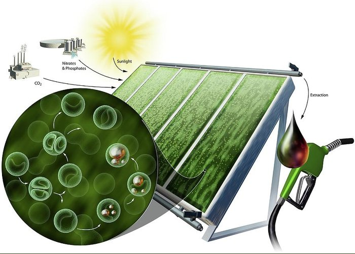 Bioenergy Greeting Cards