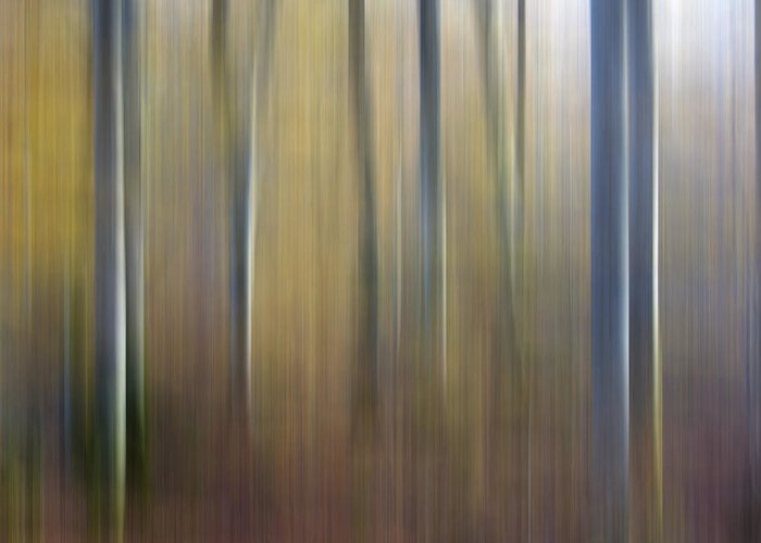 Abstract Artistic Beech Forests Beech Forest Betula Birches Birch Tree Birch Wood Birch Blur Effects Blur Effect Blurred Blurry Daylight Daytime Day Forest Landscapes Forest Landscape Forests Forest Landscapes Landscape Motion Blur Nature Nobody Outdoors Out Of Focus Outside Picture Details Picture Detail Surreal Trees Tree Trunks Tree Trunk Tree Wood Greeting Card featuring the photograph Birch Trees. Abstract. Blurred by Bernard Jaubert