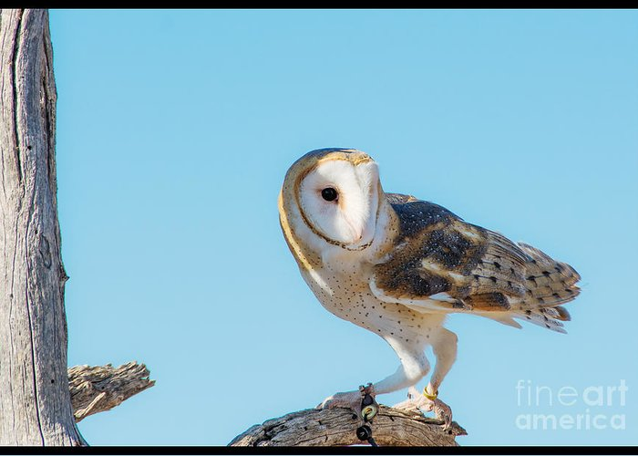 Raptor Greeting Card featuring the photograph Bird 11 by Larry White