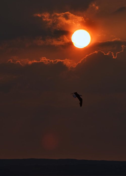 Enniscrone Of The Sunsets Greeting Card featuring the photograph Bird In Sunset by Tony Reddington