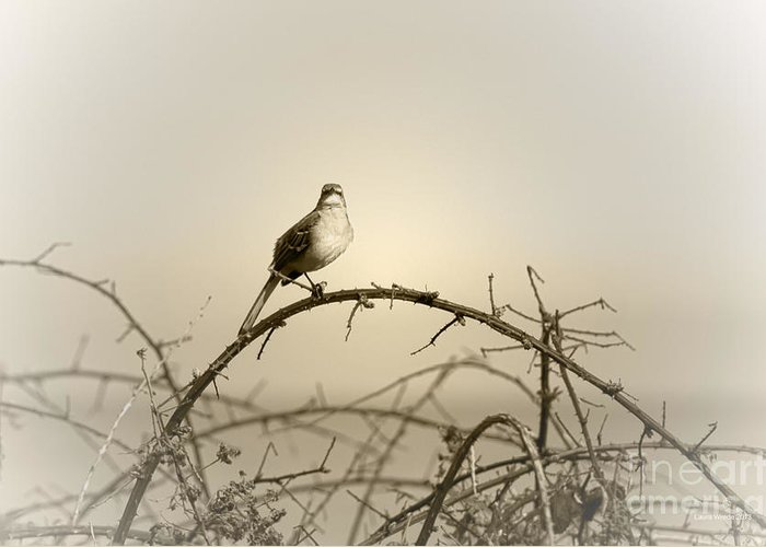 Songbird Greeting Card featuring the photograph Bird In The Briar by Artist and Photographer Laura Wrede