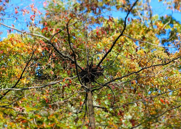 Nest Greeting Card featuring the photograph Bird Nest In A Tree by Rebecca Reed