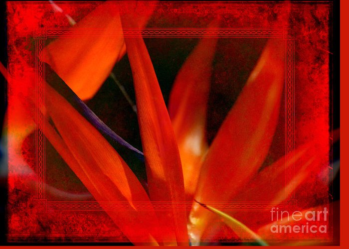 Bird Of Paradise Greeting Card featuring the photograph Bird Of Paradise Flower 5 by Susanne Van Hulst