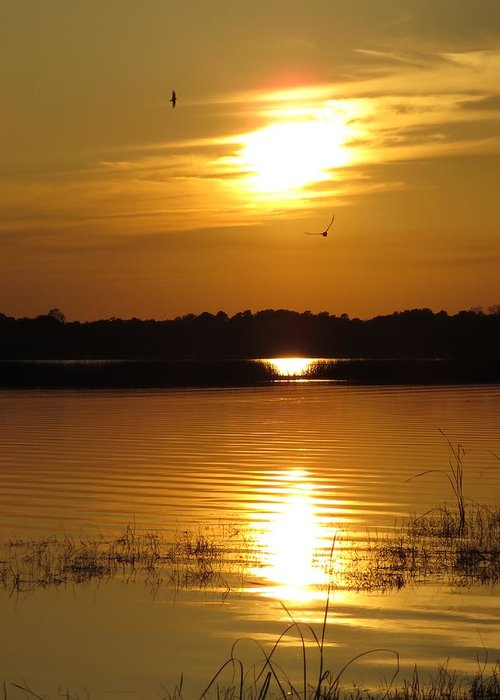 Sunset Greeting Card featuring the photograph Birds At Sunset by Zina Stromberg