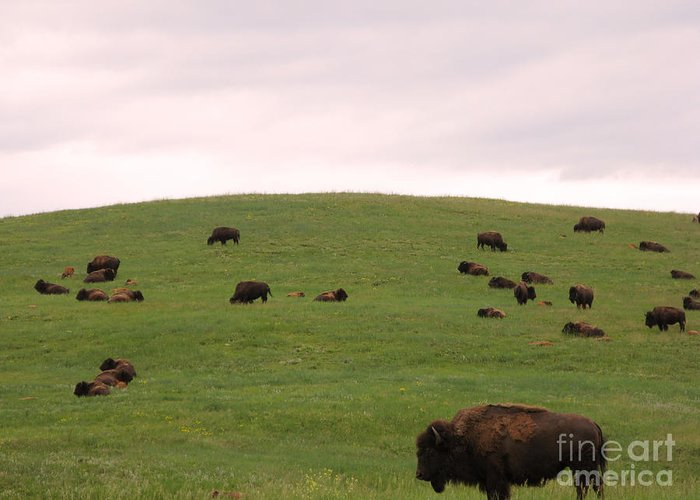 American Greeting Card featuring the photograph Bison Herd by Olivier Le Queinec