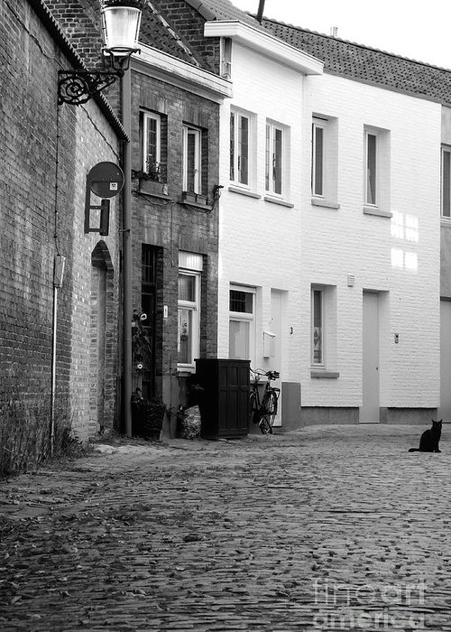 Black Cat Greeting Card featuring the photograph Black Alley Cat by Jessica Panagopoulos