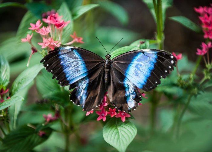 Flower Greeting Card featuring the photograph Black and Blue Wings by Paul Johnson