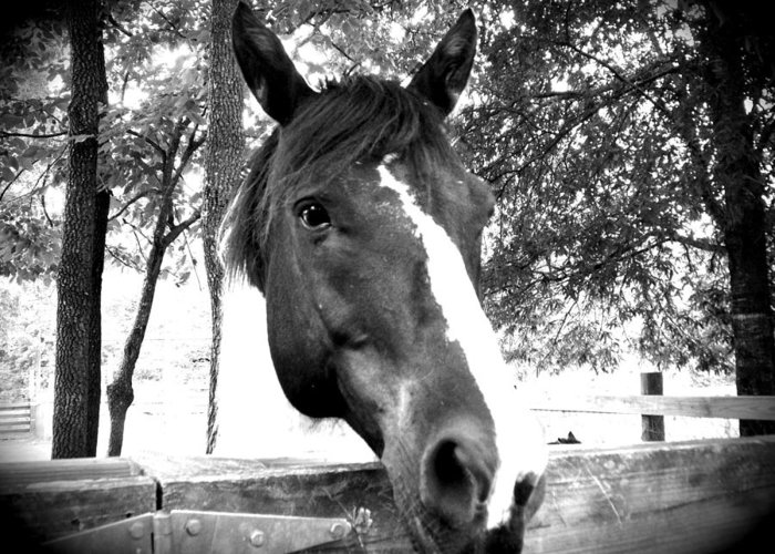 Greeting Card featuring the photograph Black And White Beauty by Regina McLeroy