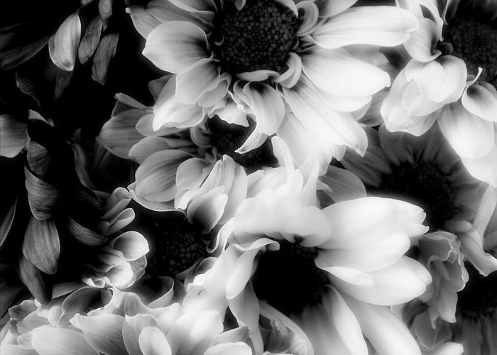 Black Greeting Card featuring the photograph Black And White by Kathleen Struckle