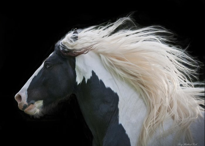 Gypsy Vanner Horse Greeting Cards