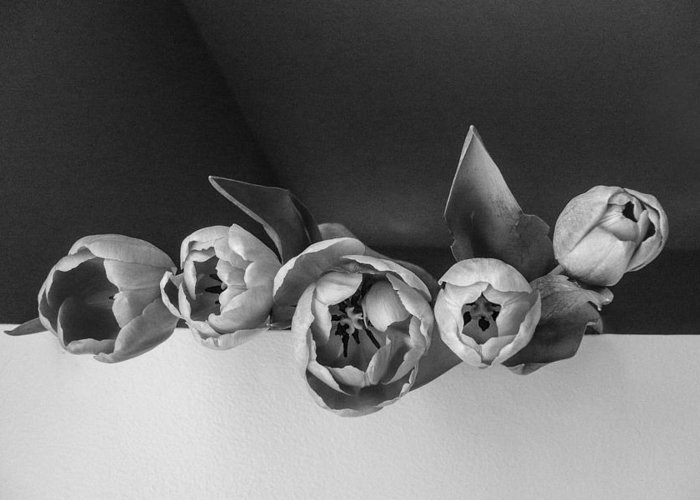 Black & White Greeting Card featuring the photograph Black And White Tulips by Jacqueline Milner