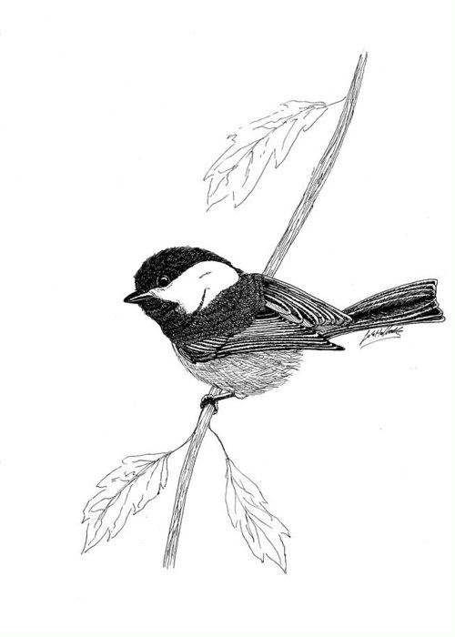 Art Greeting Card featuring the drawing Black Capped Chick-a-dee by Lee Halbrook