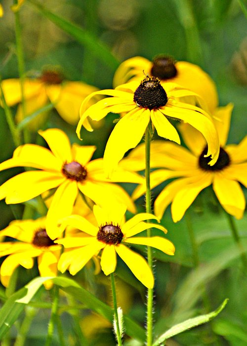 Flower Greeting Card featuring the photograph Black Eyed Susan 1 by Marty Koch