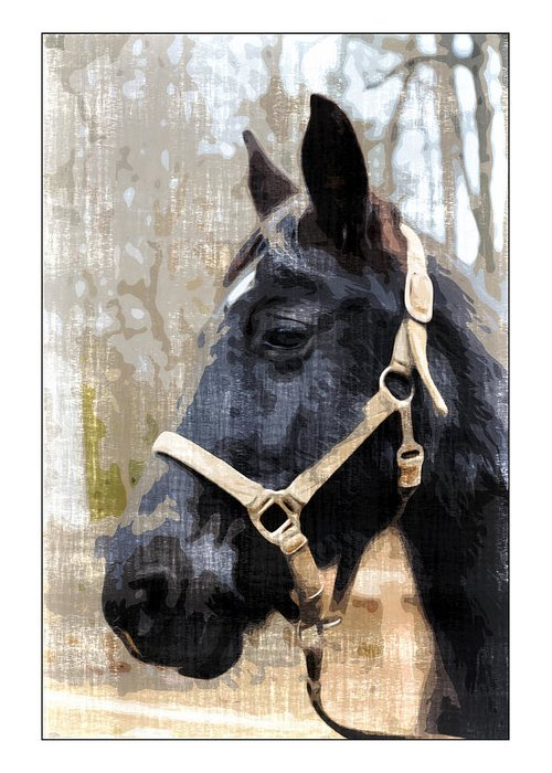 Animal Greeting Card featuring the photograph Black Horse by Susan Leggett