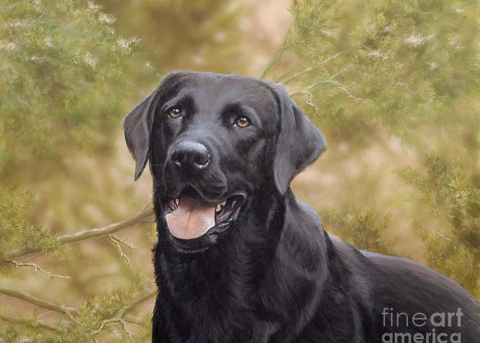Black Labrador Greeting Card featuring the painting Black Watch by John Silver