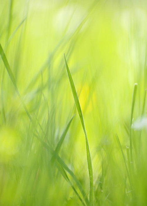 Spring Greeting Card featuring the photograph Blades Of Grass - Green Spring Meadow - Abstract Soft Blurred by Matthias Hauser