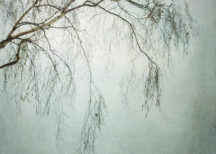 Twig Greeting Card featuring the photograph bleakly III by Priska Wettstein
