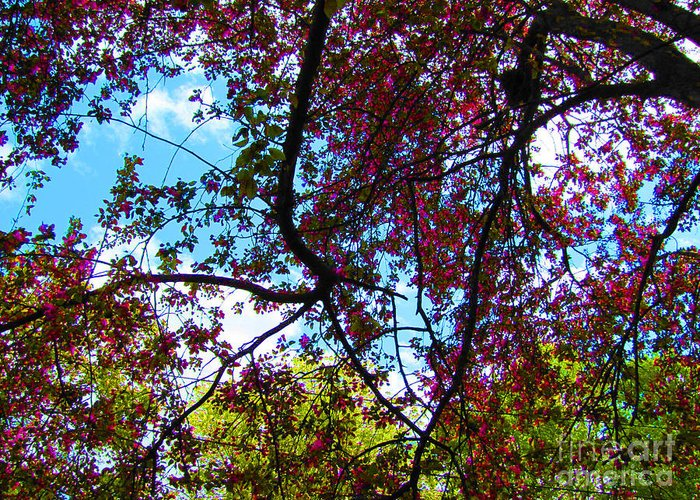 Pink Greeting Card featuring the photograph Blossom by Minding My Visions by Adri and Ray