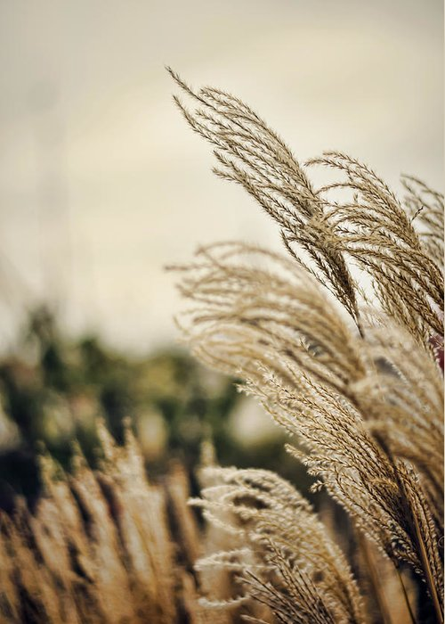 Grass Greeting Card featuring the photograph Blowing In The Wind by Heather Applegate