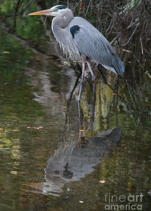 Blue Heron Greeting Card featuring the photograph Blue 1212 by Deborah Benoit