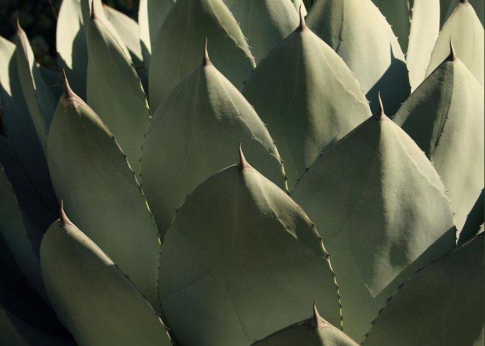 Blue Aloe Greeting Card featuring the photograph Blue Aloe by Ellen Henneke