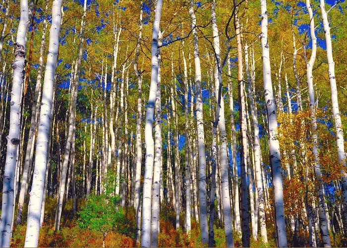 Fall Greeting Card featuring the photograph Blue Aspen On Grand Mesa by Gerald Blaine
