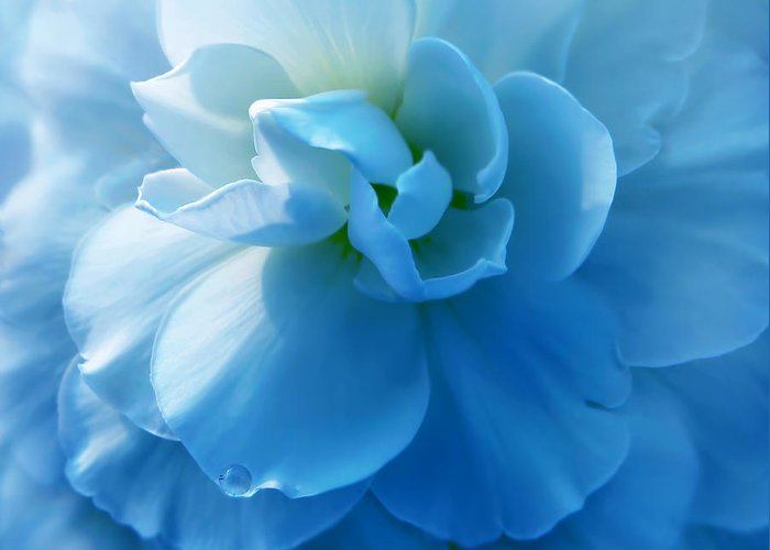 Begonia Greeting Card featuring the photograph Blue Begonia Flower by Jennie Marie Schell
