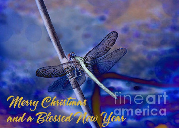Dragonfly Greeting Card featuring the photograph Blue Christmas by Beverly Guilliams