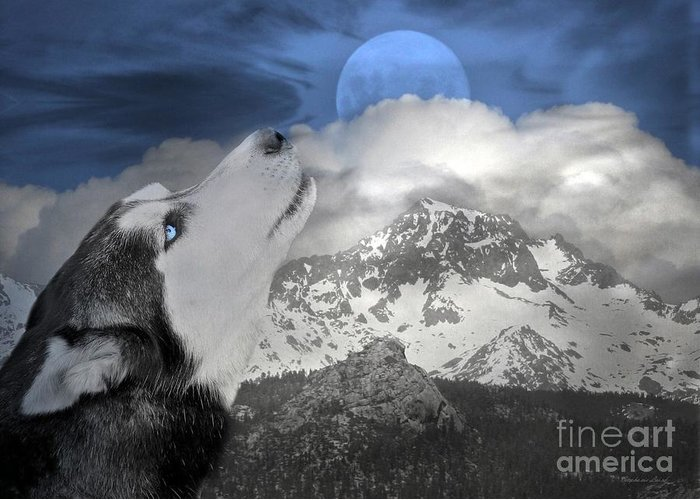 Husky Greeting Card featuring the photograph Blue Eyed And Moon by Stephanie Laird