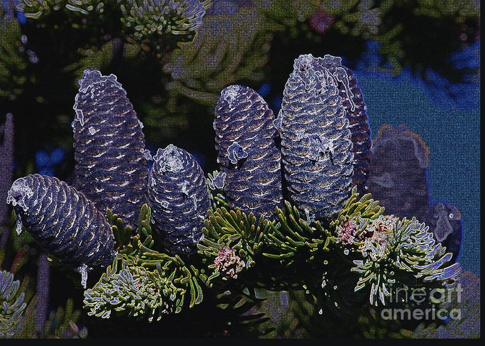 Fir Cones Greeting Card featuring the photograph Blue Fir Cones 2 Outlined by Sharon Talson