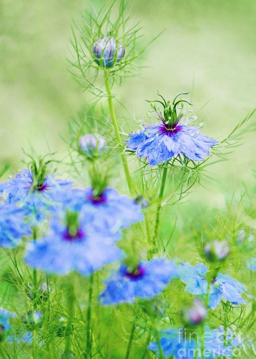 Flowers Greeting Card featuring the photograph Blue Flowers by Diana Kraleva
