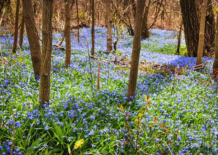 Flowers Greeting Card featuring the photograph Blue Flowers In Spring Forest by Elena Elisseeva