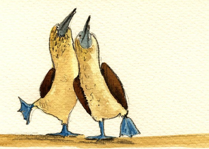 Seabirds Greeting Cards