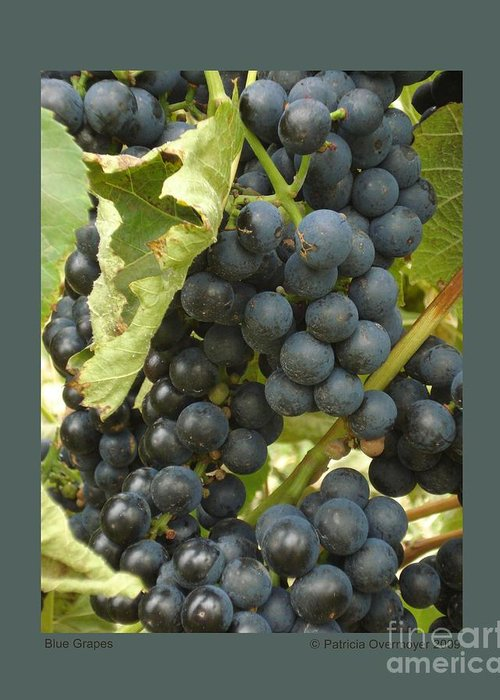Grape Greeting Card featuring the photograph Blue Grapes by Patricia Overmoyer