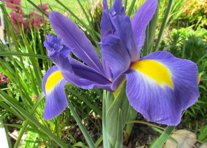 Flower Greeting Card featuring the photograph Blue Irises by Joyce Woodhouse