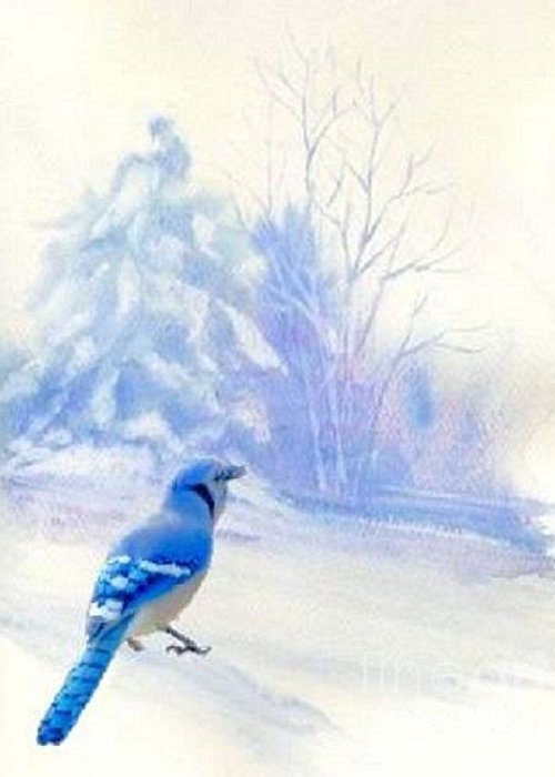 Bluejay Greeting Card featuring the photograph Blue Jay In Winter by Janette Boyd