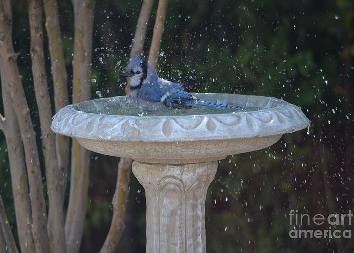 Blue Jay Photos Greeting Card featuring the photograph Blue Jay Loves To Splash Water by Ruth Housley