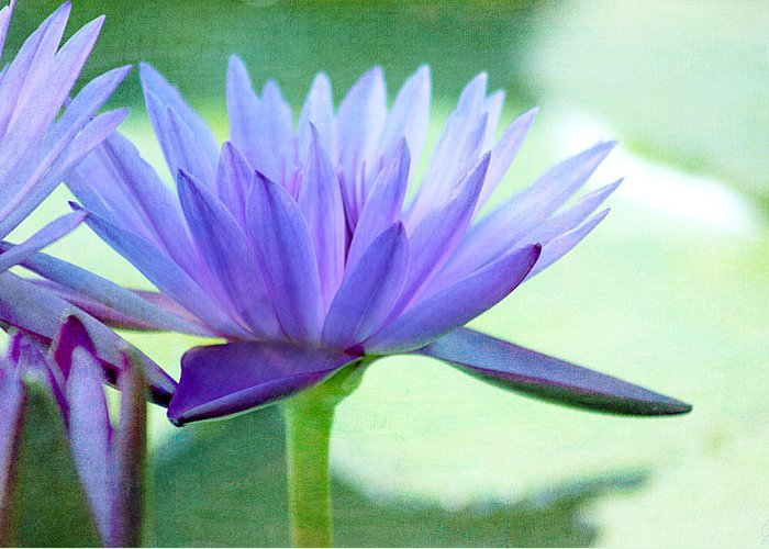 Waterlily Greeting Card featuring the digital art Blue Lily by Margaret Hormann Bfa