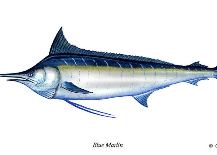 Charles Greeting Card featuring the painting Blue Marlin by Charles Harden