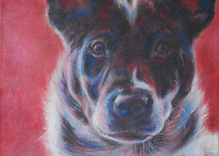 Cattle Dog Greeting Cards