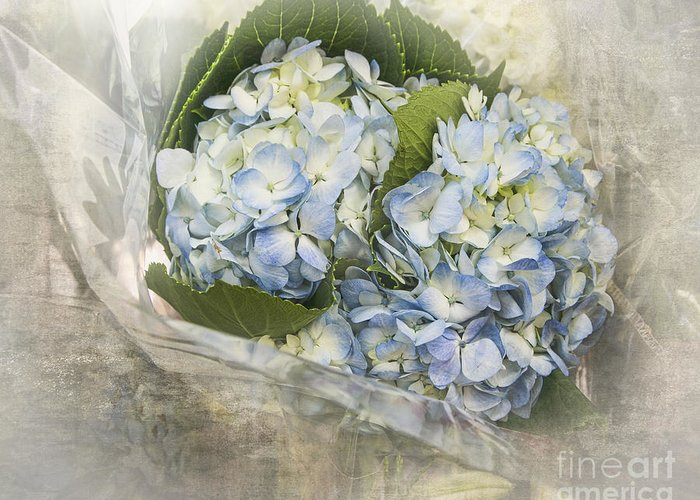 Hydrangea Greeting Card featuring the photograph Blue Moon by TN Fairey