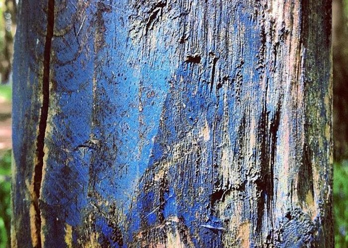 Iccloseups Greeting Card featuring the photograph Blue Painted Wood #iccloseups #painted by Nic Squirrell