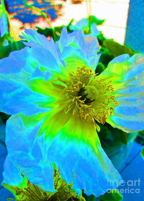 Art Greeting Card featuring the photograph Blue Poppy Neon by Virginia Simmons