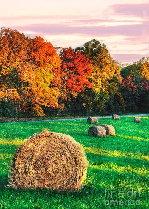 North Carolina Greeting Card featuring the photograph Blue Ridge - Fall Colors Autumn Colorful Trees And Hay Bales II by Dan Carmichael