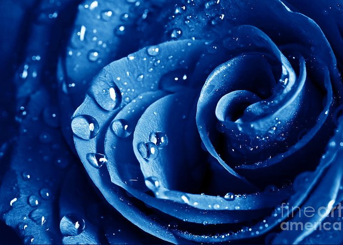 Blue Roses Greeting Card featuring the photograph Blue Roses by Boon Mee