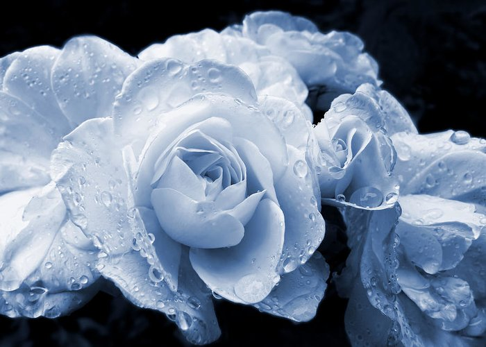 Rose Greeting Card featuring the photograph Blue Roses With Raindrops by Jennie Marie Schell