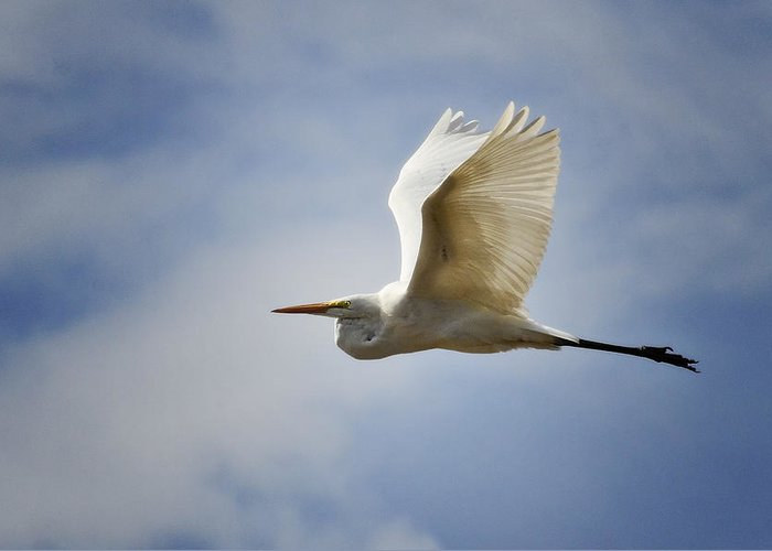 Great Egret Greeting Card featuring the photograph Blue Skies Ahead by Saija Lehtonen