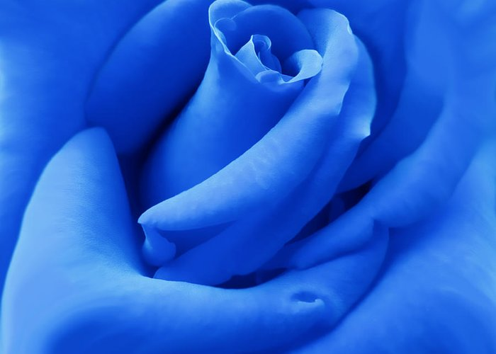 Rose Greeting Card featuring the photograph Blue Velvet Rose Flower by Jennie Marie Schell