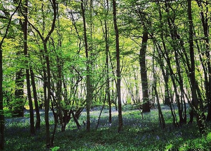 Nature Greeting Card featuring the photograph Bluebells In Pittswood by Nic Squirrell